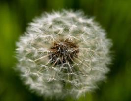 Przyczyny powstawania alergii